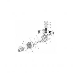 Vis plastique de flasque de pompe Magic (6x35mm) - lot de 6