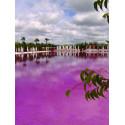 Colorant piscine Fuschia Aquacouleur