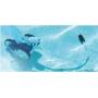 Robot de piscine JETVAC